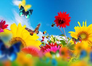 Dorit Brauer Online Classes for Inner Peace